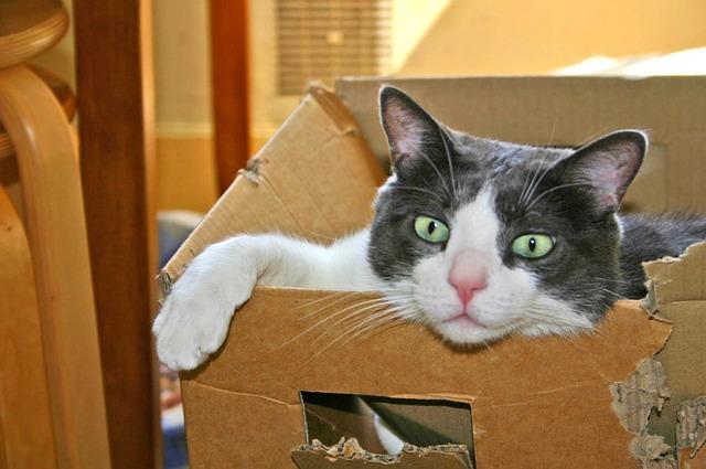 Przeprowadzka z kotem – jak się zorganizować, aby nie stresować zwierzaka?